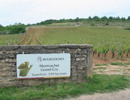 Montrachet grand Cru è vino da investimento?